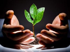 Продажа чернозема - Бизнес, инвестиции, стартапы