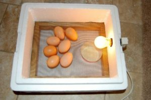 Как самому сделать инкубатор для яиц