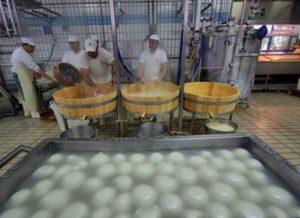 Открываем производство сыра - мини-сыроварня