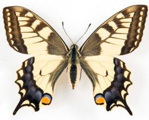 Бизнес-идея №814. Разведение бабочек в домашних условиях