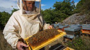 Бизнес на пчелах