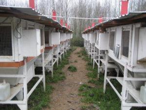 Ферма Михайлова по разведению кроликов-акселератов