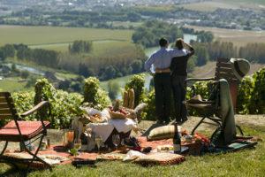 Производство вина – выгодный бизнес и эко-туризм