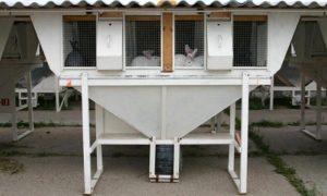 Акселерационное кролиководство Михайлова от А до Я