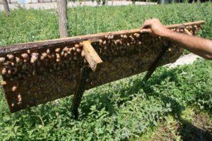 Бизнес-план по выращиванию улиток