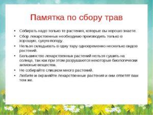 Полезные свойства, применение и сроки сбора лекарственных растений