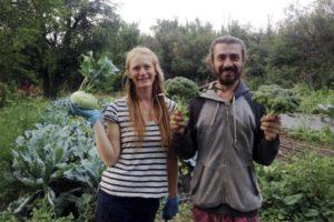 Донские фермеры вырастили сто видов экзотических овощей