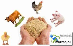 Кормовая мука из саранчи: восполнение дефицита животного белка в кормах для животных