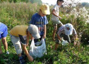 Сбор лекарственных трав и растений