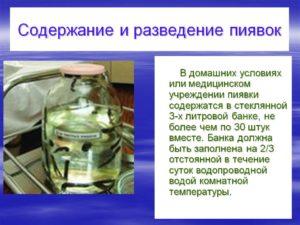 Разведение пиявок в домашних условиях