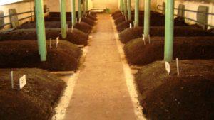 Производство и продажа биогумуса