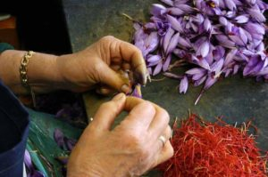 Шафран: выращивание и продажа