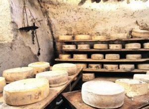 Производство сыра: бизнес-план создание собственного мини-цеха прогноз окупаемости и прочее