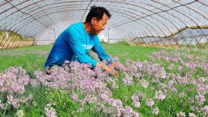 Фермерство: Выращивание экзотических овощей